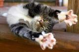 Як відучити кота дряпати меблі: ефективні способи і прийоми, поради та рекомендації