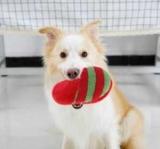 Як навчити собаку приносити тапочки? Все просто