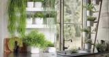 Цветы на кухне: ТОП-10 лучших растений и идеи озеленения