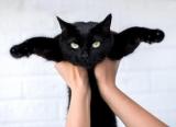 Куди віддати кота на час або назавжди: опис варіантів
