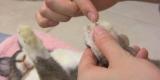 Як підстригати кігті кролику - покроковий опис та рекомендації