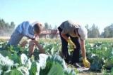 Працюючі на сонці люди більше за інших схильні до небезпечного захворювання