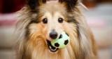Для счастливых хвостиков: 7 лучших подарков для твоей собаки