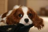 Можна собакам виноград? Чим годувати дорослу собаку
