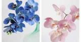 Как ухаживать за орхидеями и вызвать повторное цветение