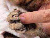 Можна підстригти кігті кішці і як правильно це робити?