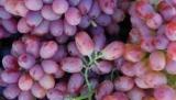 Вчені назвали виноград найкращим антидепресантом